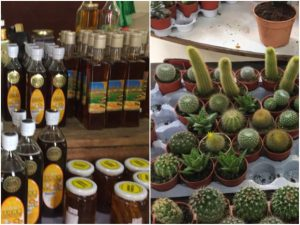 Honey and Cactus farm in Cameron Highlands